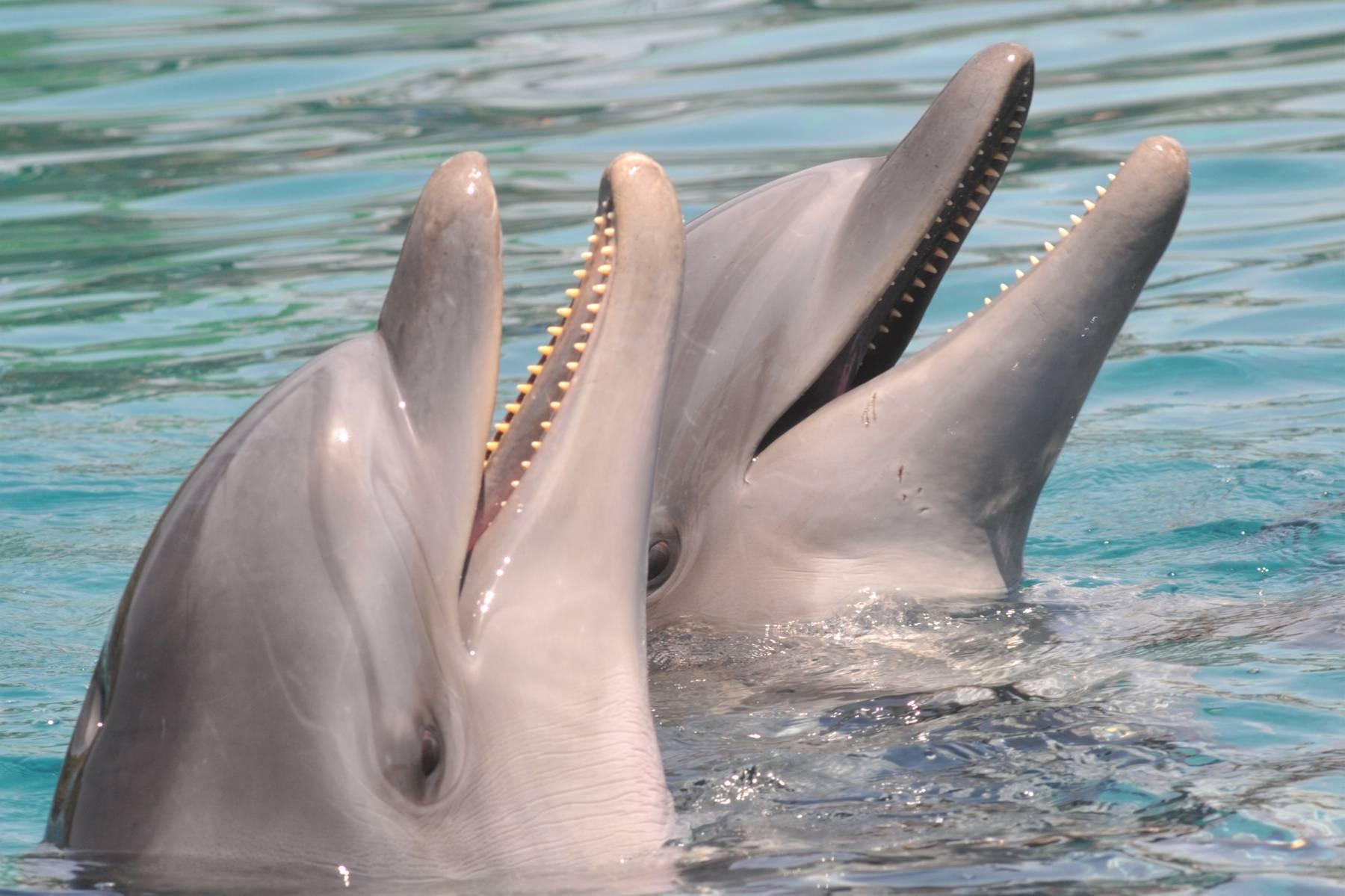 Чем дышит дельфин картинки